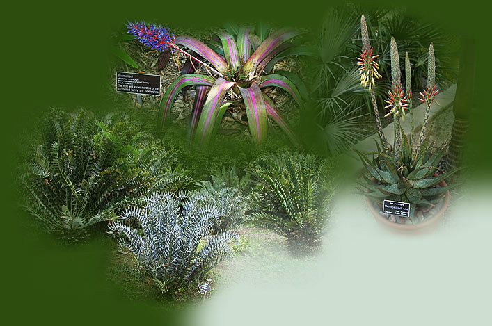 Plant Signs Home Botanical garden quality plant identification signs – Garden Plant Signs